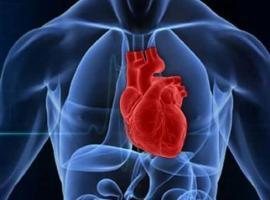 Kalp ve Damar Cerrahisi