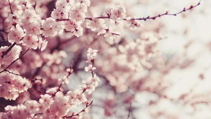 Bahar alerjisinden korunmanın yolları